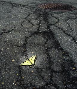 Dye Works Butterfly