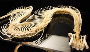 Anu-Serpent Bones 2